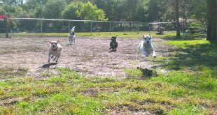 A group of dogs enjoying Paso Nogal Dog Park in Pleasant Hill. (LISA WHITTAKER / Courtesy)