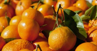 Fresh farmers market citrus. (PCFMA / Courtesy)