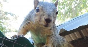 squirrel-john-grubka-rgb-jpg3