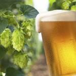 beer-hops