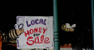 Honey for sale-rgb